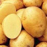 Yukon_Gold_Potato_Seeds