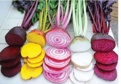 Rare-Beetroot-seeds-MIX-COLORS-SIX-VARIETIES-Heirloom-Organic-Seeds-garden-decoration-plant-free-shipping-20pcs