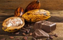 11-17_web_cocoa_saintlucia