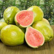 guava-tree-450w