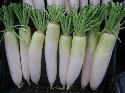 daikon_globalism_pictures