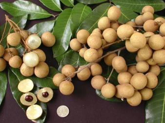 longanfruit_000