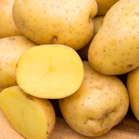 gurney-s-vegetable-plants-74018-64_1000